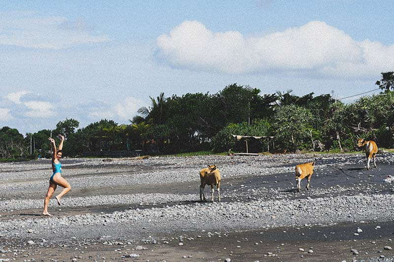 Cows on beach Medewi